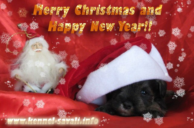 Merry Christmas and Happy New Year from kennel Savali!!! 16316310
