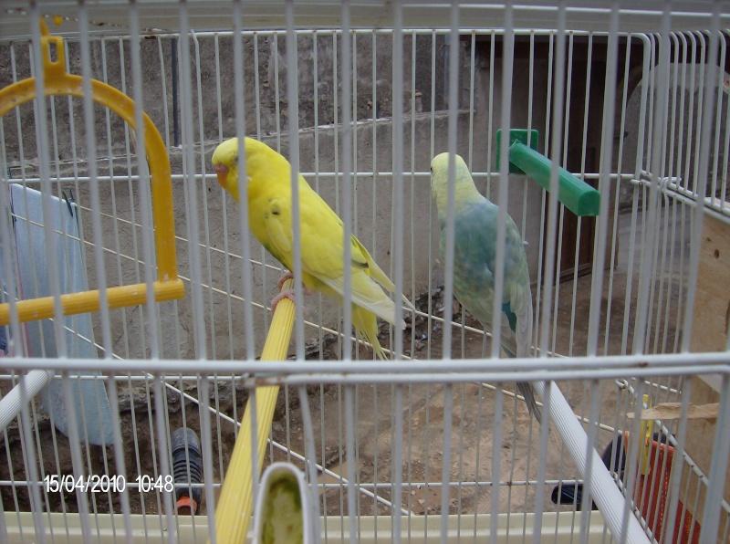 nuova coppia Nuova_11