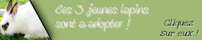 - Bourgogne(21) Tilt,lapin de 8 mois 33310