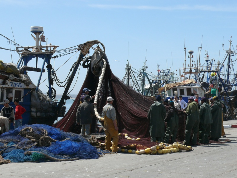 La pêche ,le poisson,les marins et l'activité au port - Page 2 P1010811