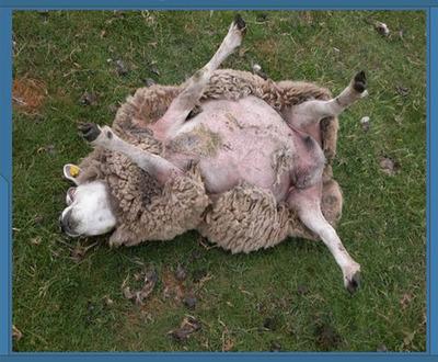 ERROR 404 Code: SHEEP Eynlv710