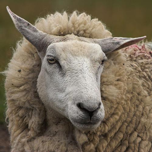 ERROR 404 Code: SHEEP Sheep10