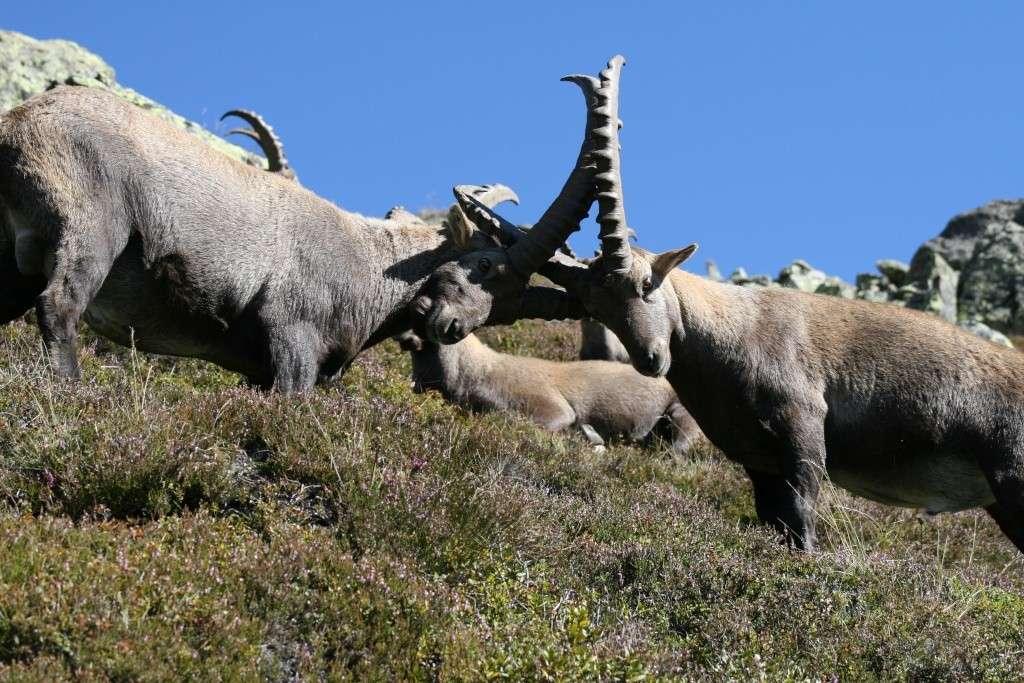 La faune du massif Img_8710