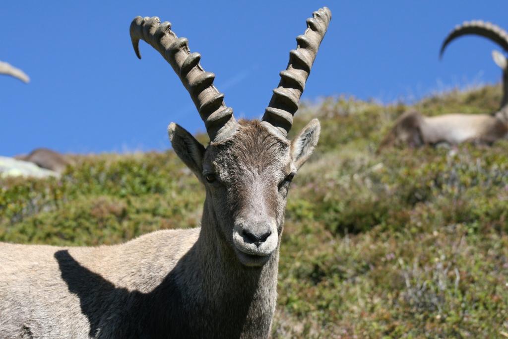 La faune du massif Img_8711