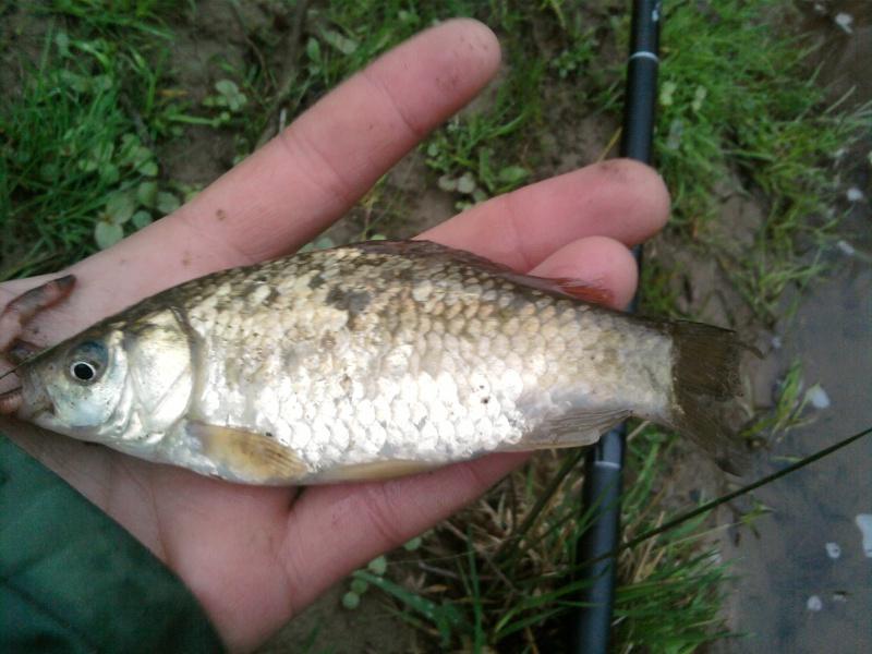 Bizard comme poisson Sp_a0219