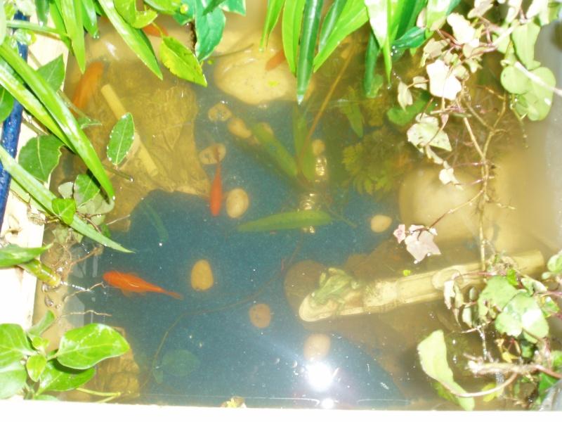 Fontaine vegetal P1010824