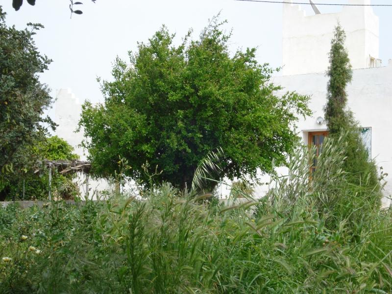 La maison d'Afoulouste ou ADDAR LAKBIRA Dsc00216