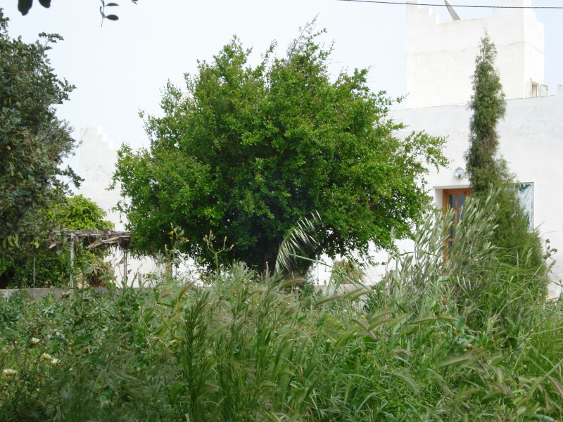 La maison d'Afoulouste ou ADDAR LAKBIRA Dsc00234