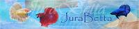 Portraits de bettas splendens - Portail Jurabe10