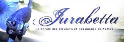 Portraits de bettas splendens - Portail Jurabe12