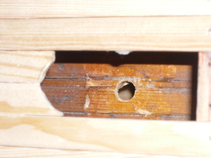 Baubericht Mayflower Sanierung - Seite 7 Sam_0650
