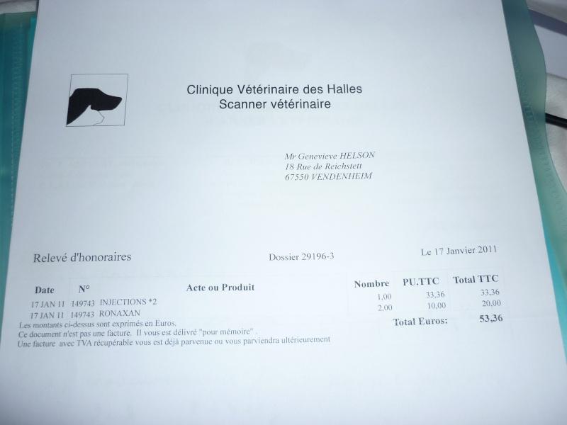 Deux mamies épagneules bretons, et leur famille dans le besoin P1040225
