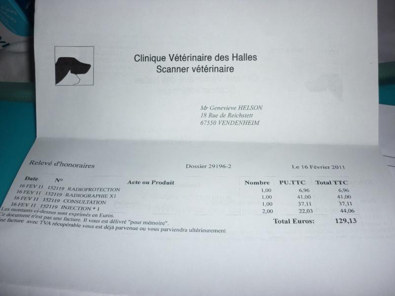 Deux mamies épagneules bretons, et leur famille dans le besoin P1040228