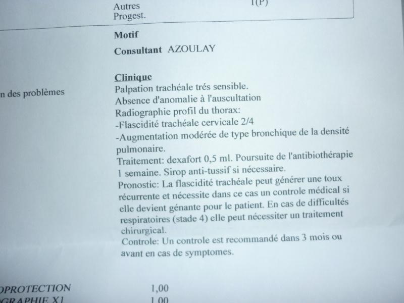 Deux mamies épagneules bretons, et leur famille dans le besoin P1040230