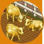 Mucca oro