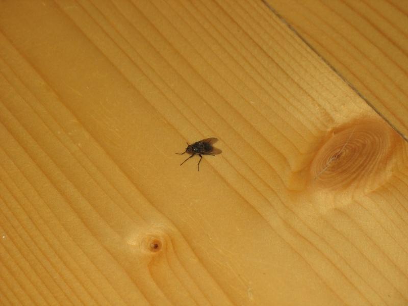Envahi de mouches depuis plusieurs mois ... besoin d'aide Img_7410