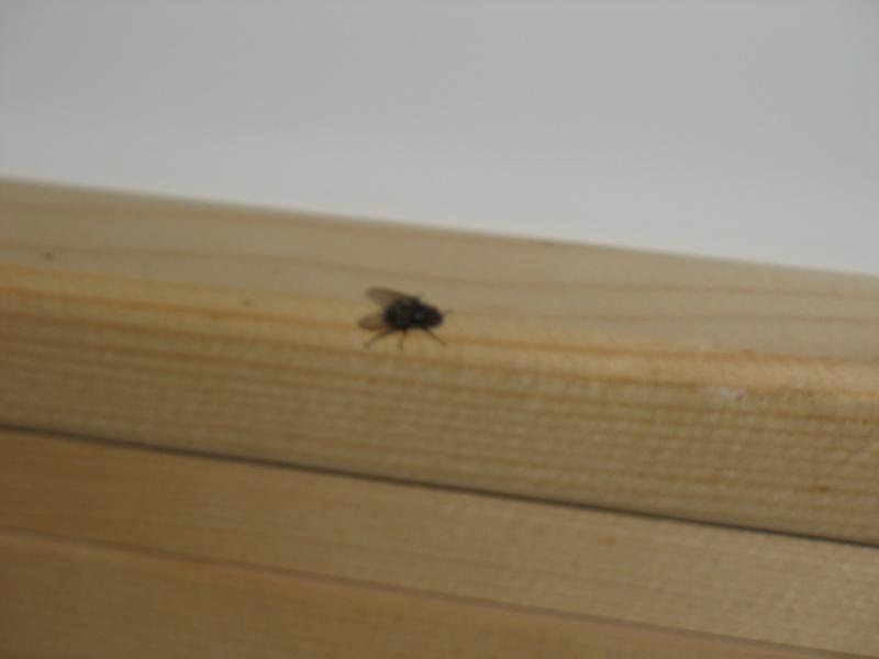 Envahi de mouches depuis plusieurs mois ... besoin d'aide Img_7411