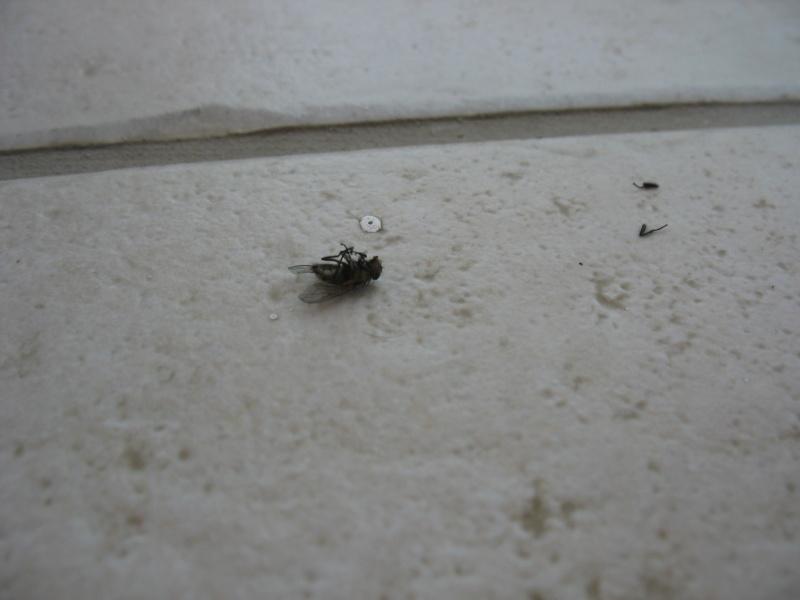 envahi de mouches depuis plusieurs mois besoin d 39 aide. Black Bedroom Furniture Sets. Home Design Ideas