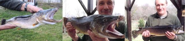 Concours du plus gros poisson - Page 3 02_trf10