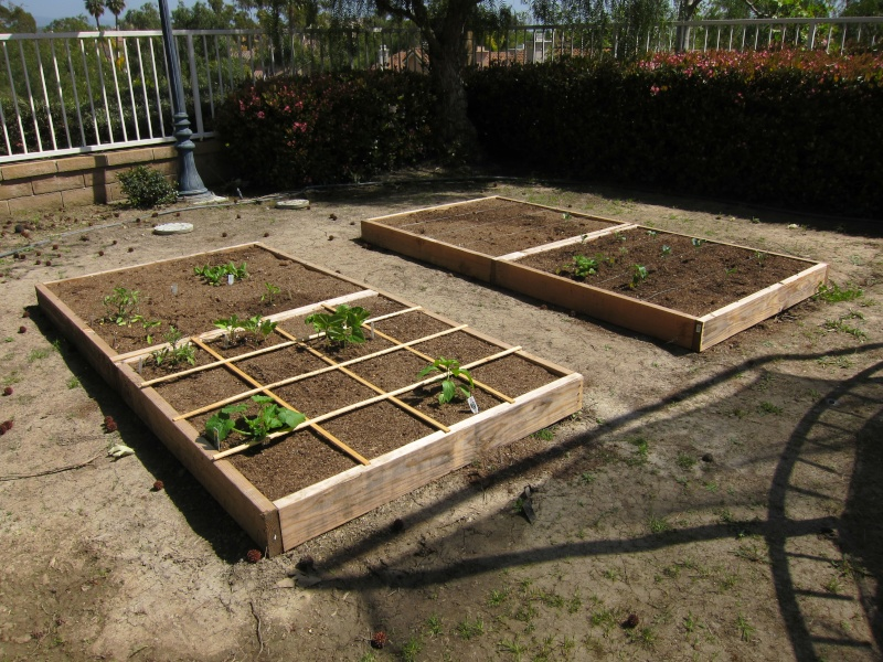 So Cal Garden Img_0310
