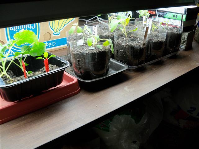 Seed starting 04-27-12