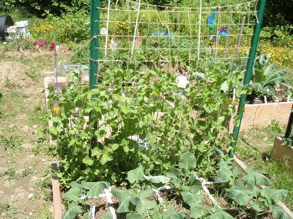 Hooray for a new Garden! 06-17-13