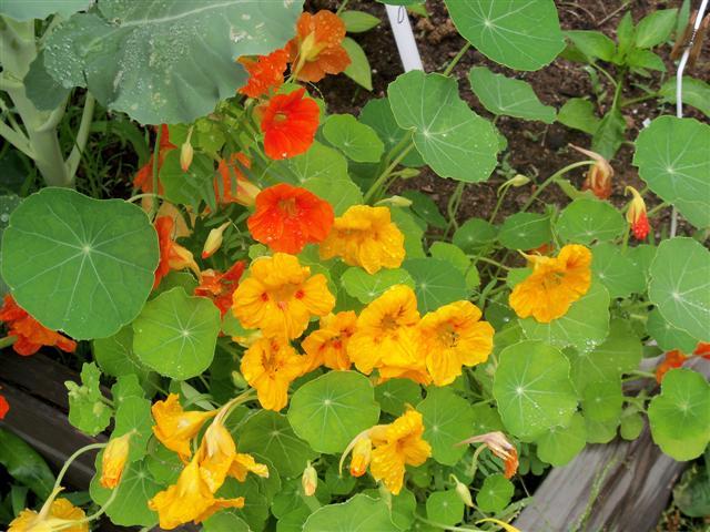 Flowers as companions 06-23-15