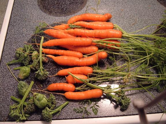 depth of carrots 10-05-10