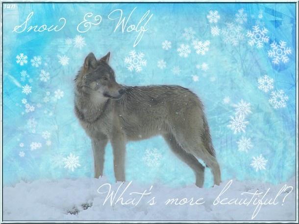 Attention, premiere etape de ma prise de pouvoir!!!! (exam) Wolf_b10