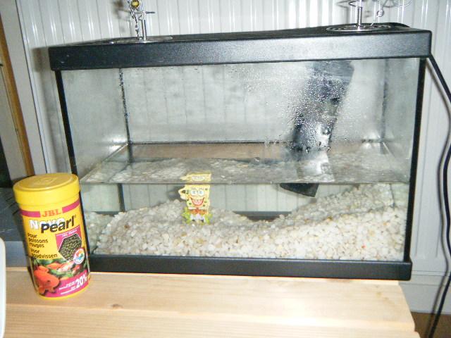donne petit aquarium + filtre Dscf0113