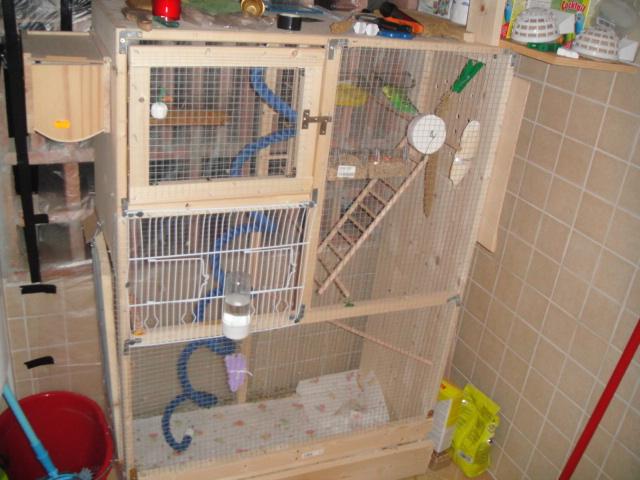 cage dans la logia ? Dsc00918