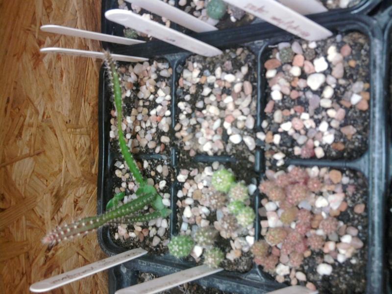 Semis de 3mois et quasiment 1 an Photo013