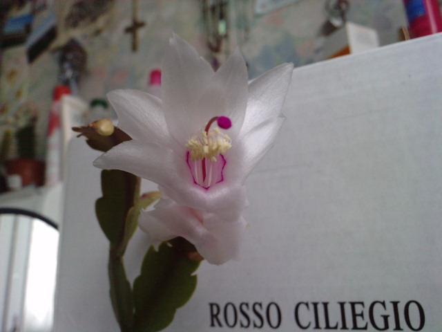 Un post sur les dernières fleurs + (Surprise :D ) P0311110