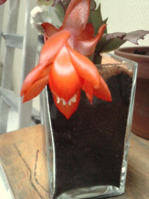 Un post sur les dernières fleurs + (Surprise :D ) P1411110