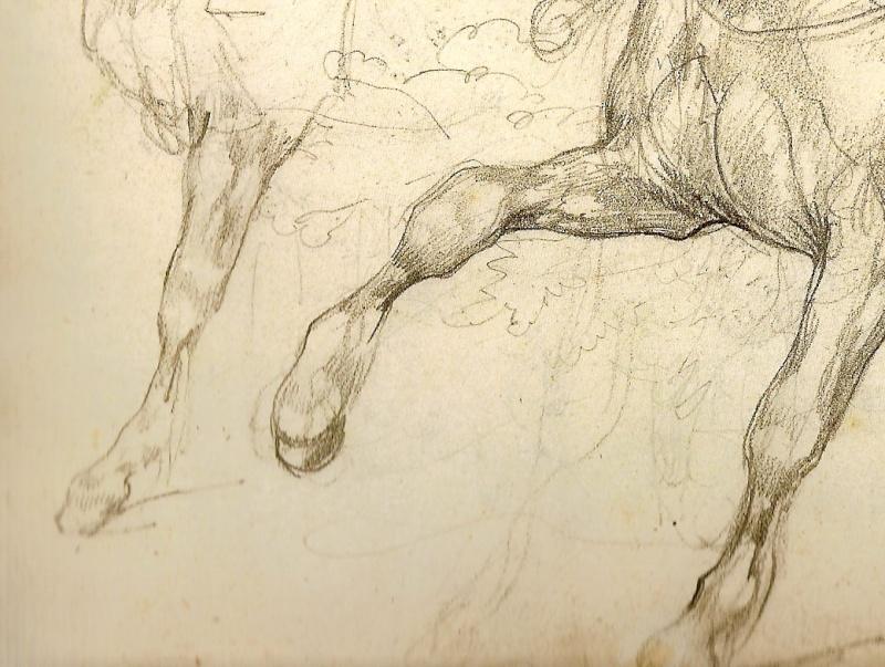 antèrieurs, postérieurs du cheval Numari19