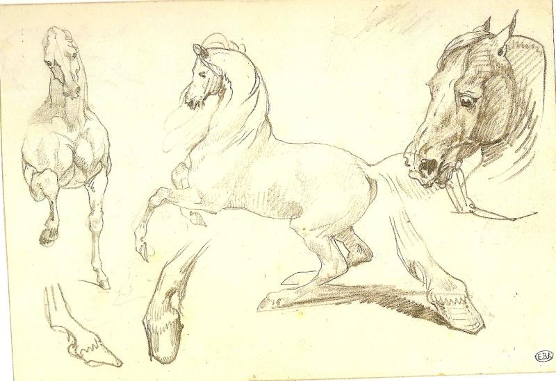 antèrieurs, postérieurs du cheval Numari20