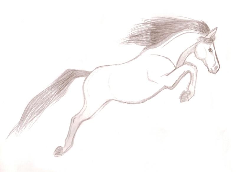 le cheval sautant le fameux obstacle invisible -_- Numari24