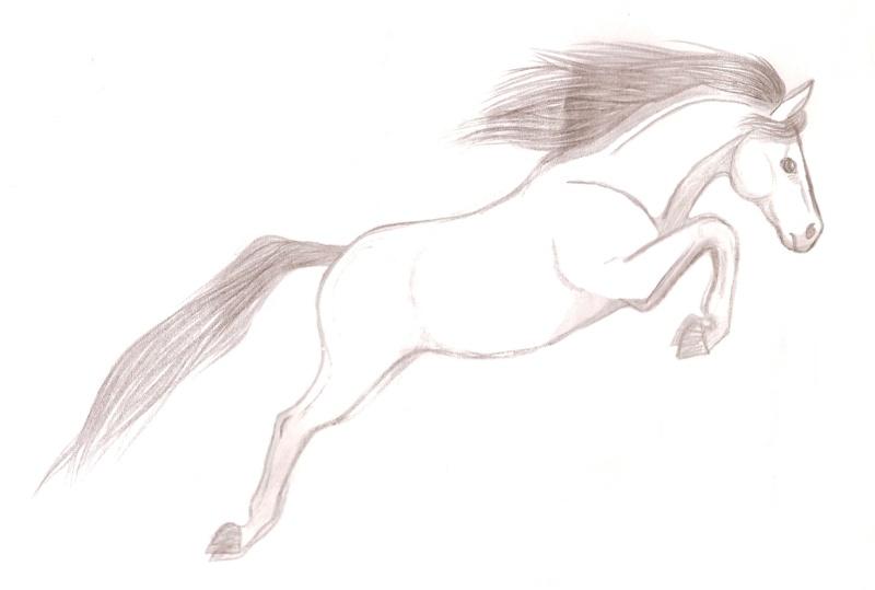 le cheval sautant le fameux obstacle invisible -_- Numari25