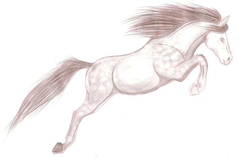 le cheval sautant le fameux obstacle invisible -_- Numari26