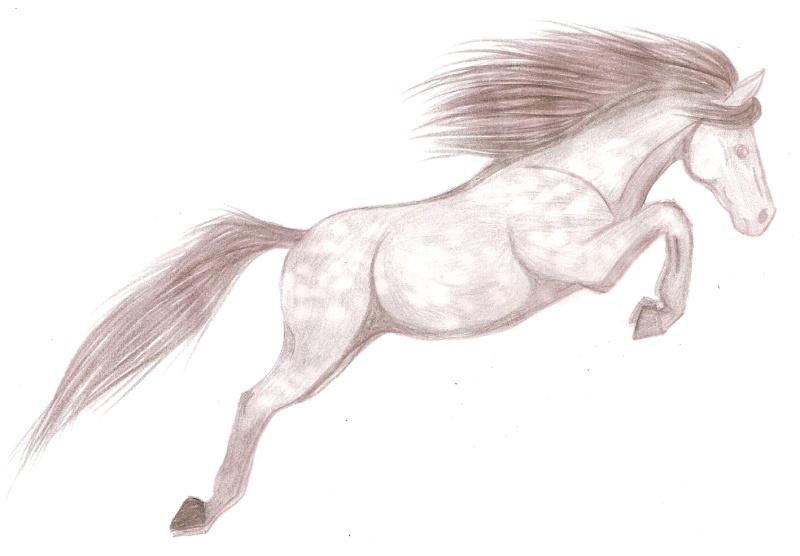 le cheval sautant le fameux obstacle invisible -_- Numari27