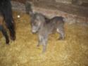 PEPITA (et POLLY) - ONC typées Shetland présumées nées en 2005 - adoptées en novembre 2008 par frenchy71 et Pascale  - Page 5 10042010