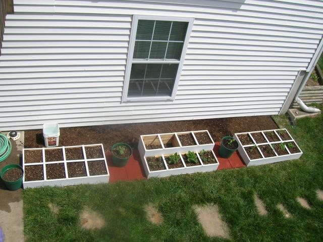 My First Square Foot Garden Dscn2712