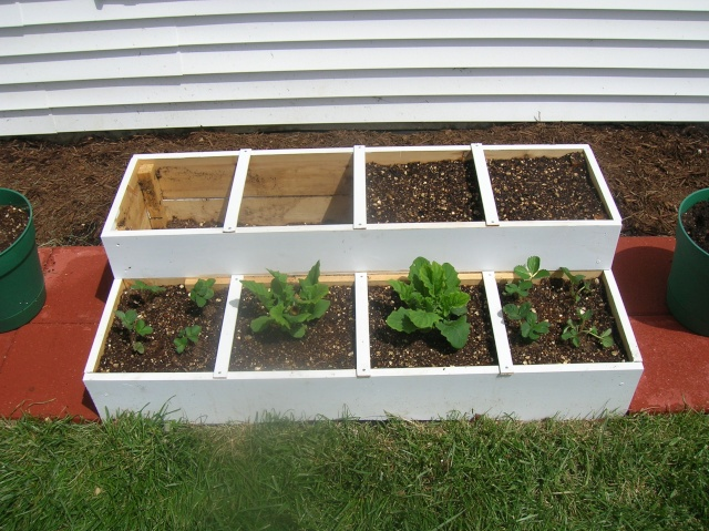 My First Square Foot Garden Dscn2713