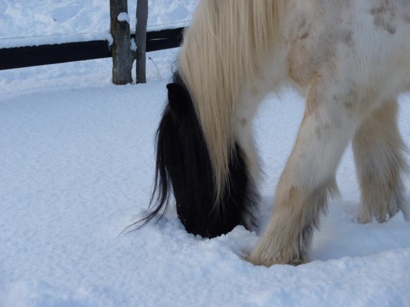 Nabucco of Wales dans la neige 0_00211