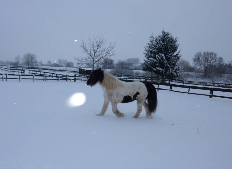 Nabucco of Wales dans la neige 0_00511