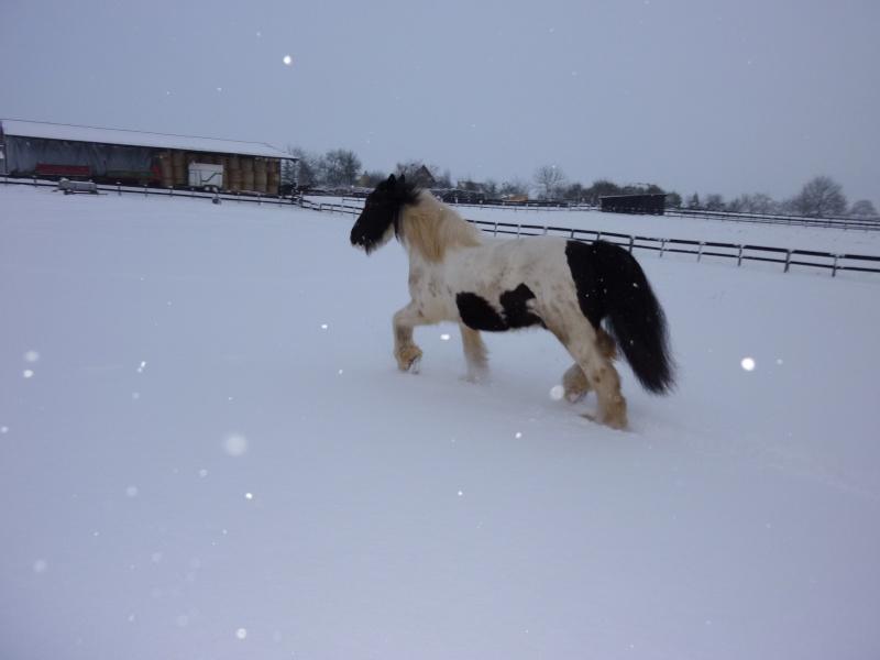 Nabucco of Wales dans la neige 0_00610