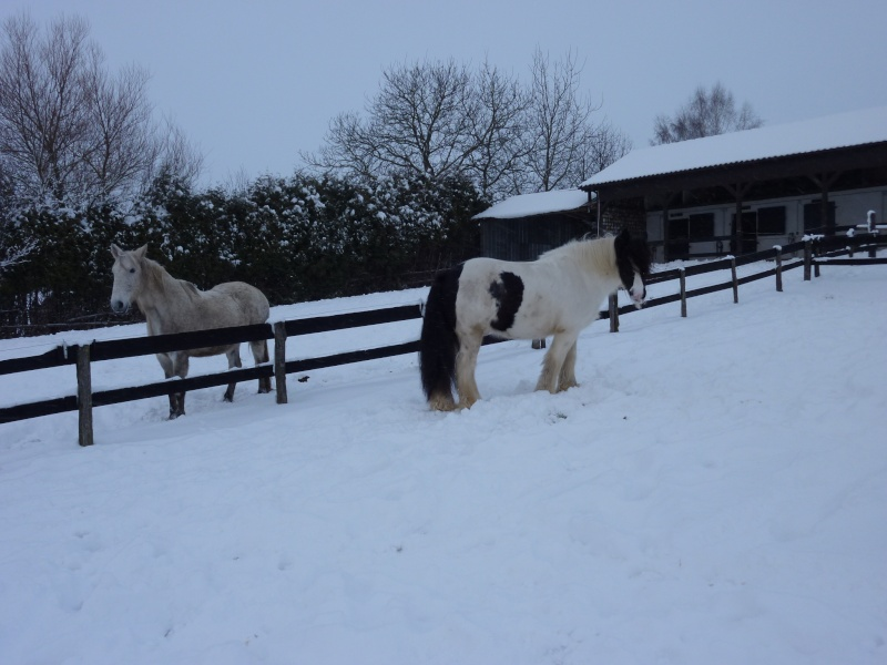 Nabucco of Wales dans la neige 0_00710