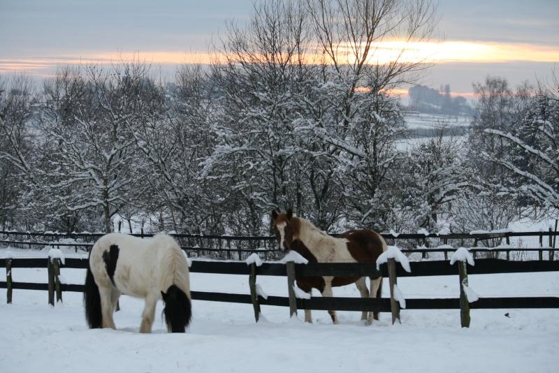 Nabucco of Wales dans la neige 0_01311