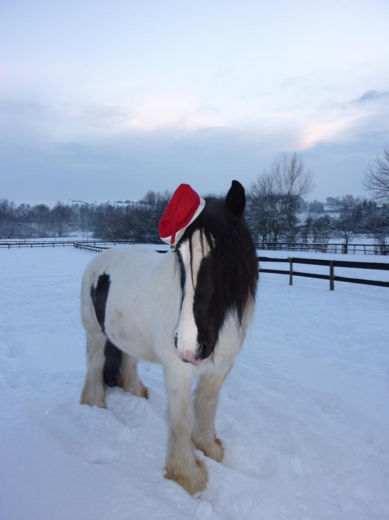 Nabucco of Wales dans la neige 0_07111