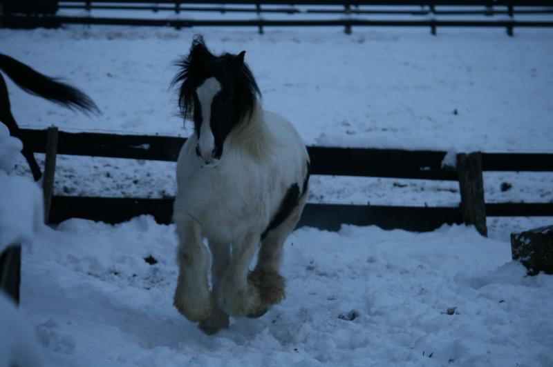 Nabucco of Wales dans la neige 0_07610